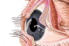 eyelid_opened