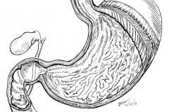 Inktober-24.Stomach