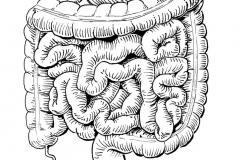 Inktober-25.Intestines